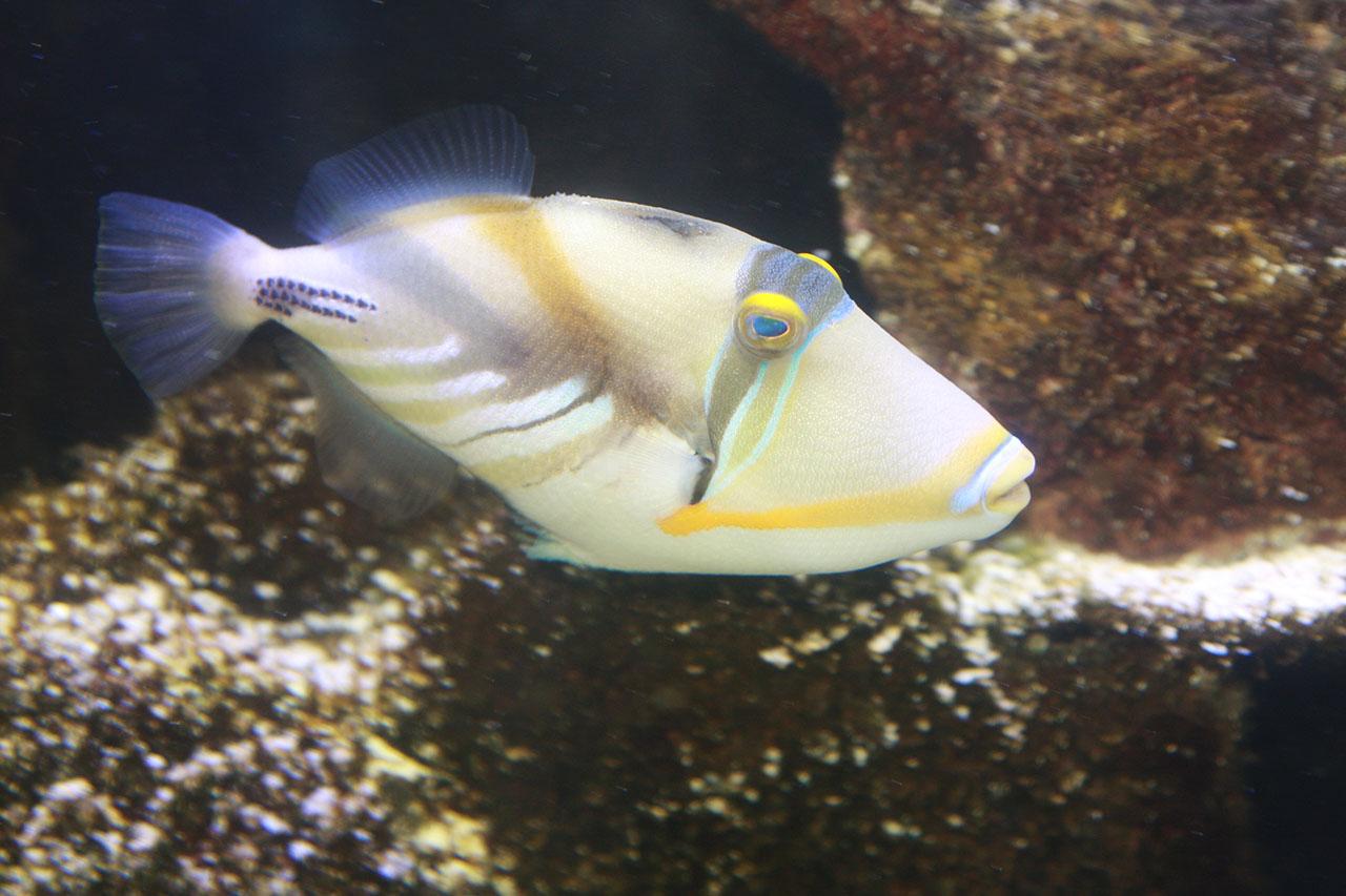 fishy-3