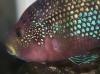 fishy-1